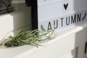 airplant-4